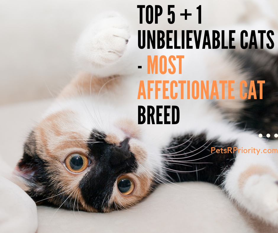 Top 5 + 1 Unbelievable Cats - Most Affectionate Cat Breed