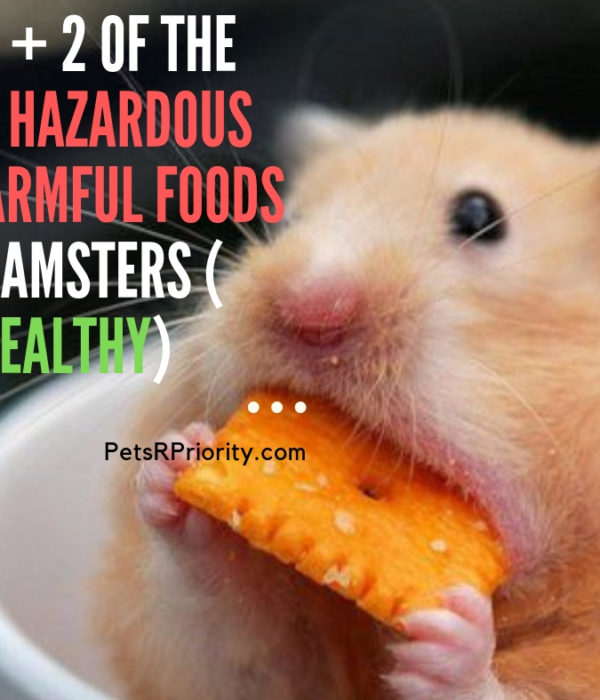 Top 5 + 2 of The Most Hazardous or Harmful food s For Hamsters ( Eat Healthy)