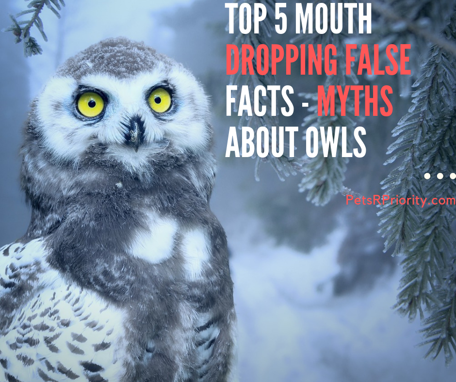 Top 5 Mouth Dropping False Facts - Myths About Owls