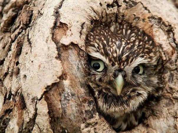 Turning Myth Owl