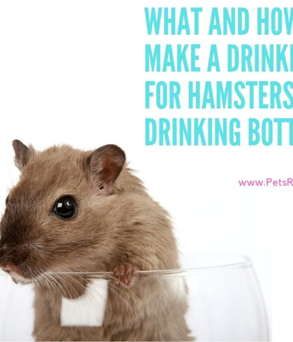How to make a drinker for hamsters – Drinking Bottle (DYI)