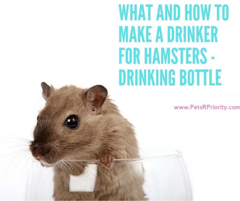 What and how to make a drinker for hamsters - Drinking Bottle