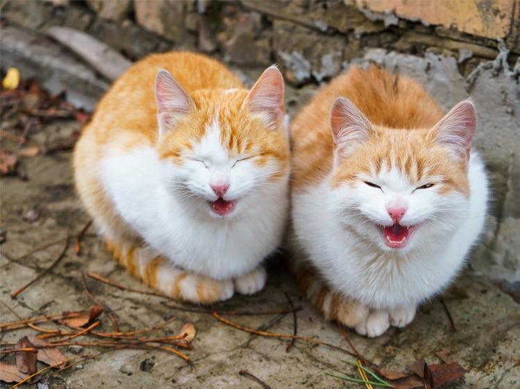 What do cats like and dislike