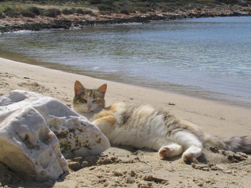 cat Bask in the sun