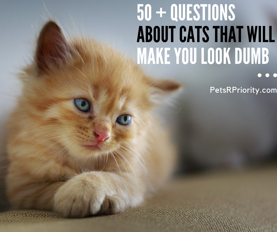 50 + Questions About Cats That Will Make You look Dumb
