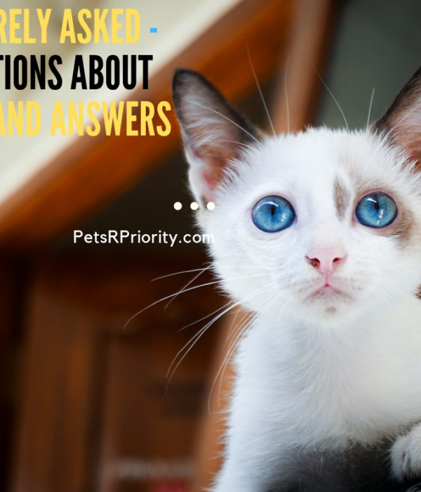 55 Rarely Asked –  Questions About Cats and Answers (FAQ)