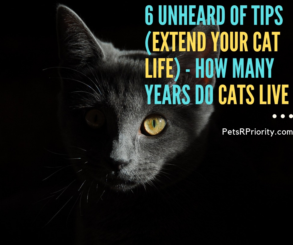 6 Unheard of Tips (Extend Your Cat life) - How many years do cats live