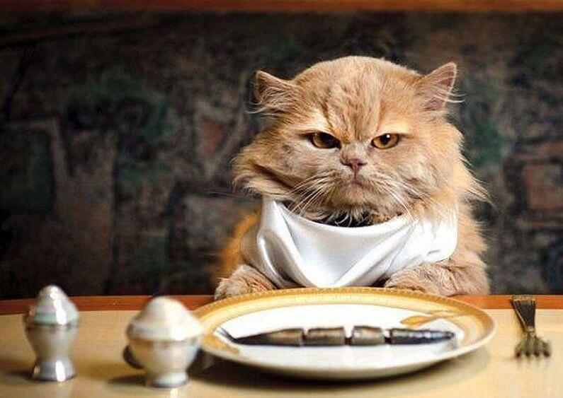 Cat's Diet