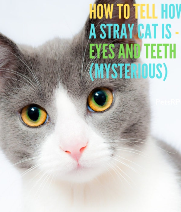 How to Tell How old a Stray Cat Is – Using Eyes and Teeth (Mysterious)