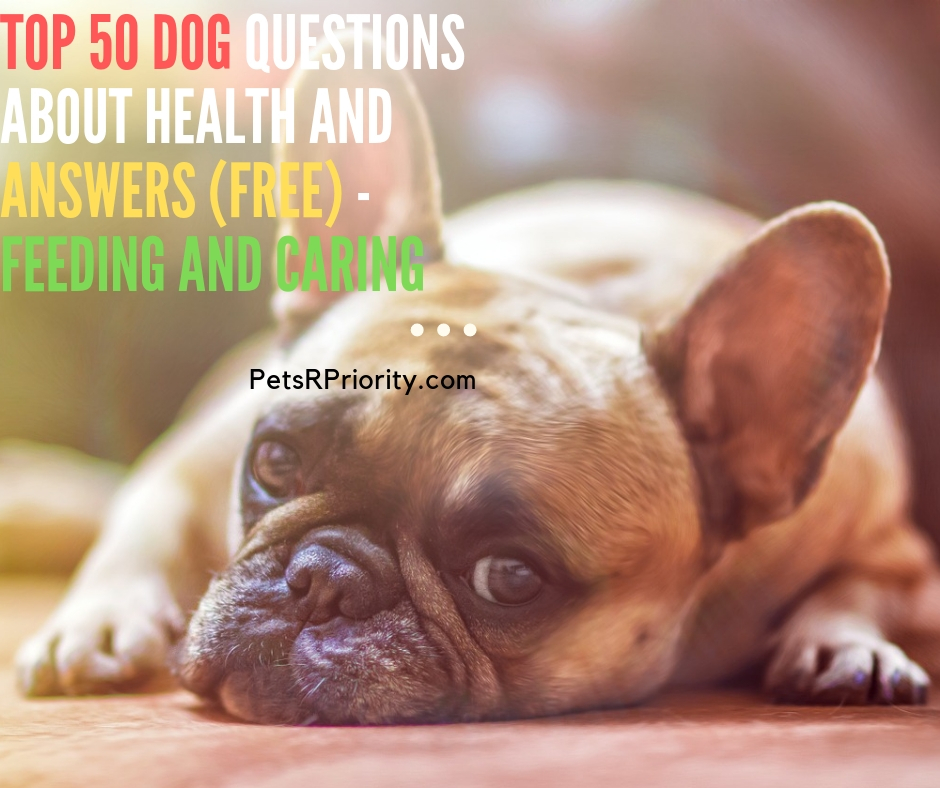 Top 50 Dog Questions About Health and Answers (Free) - Feeding and Caring