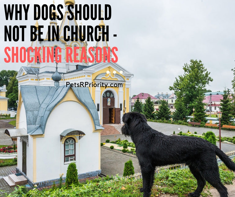 Why Dogs should Not Be in Church - Shocking Reasons