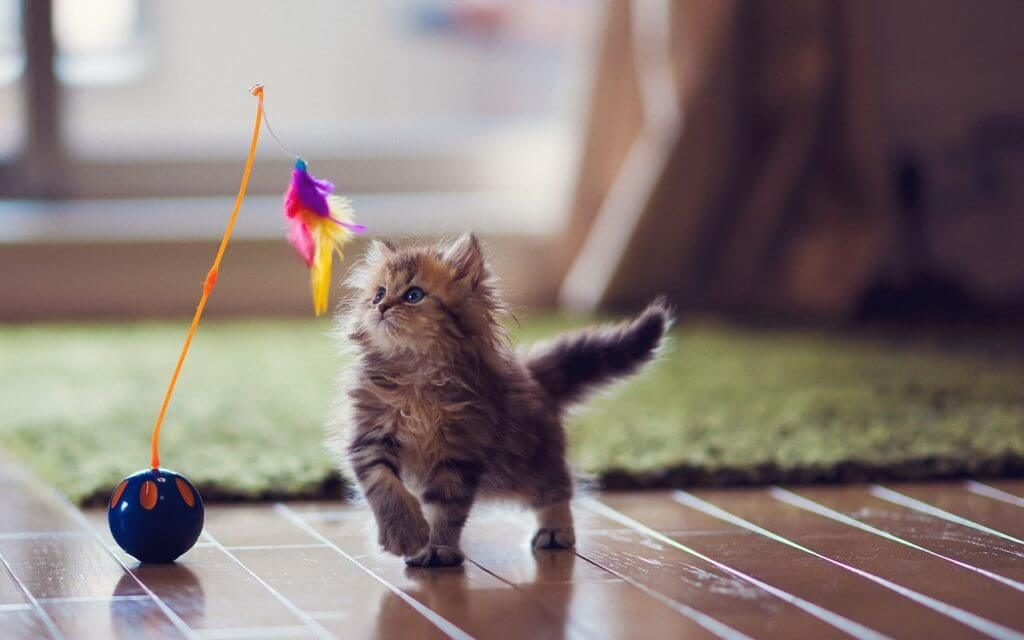 little playful cat