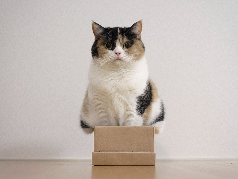 Cats and boxes photos, reasons, history, safety