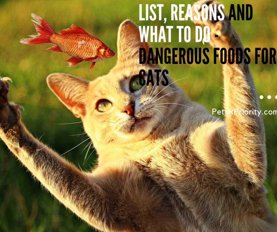 List Reasons and What to do - Dangerous Foods for Cats