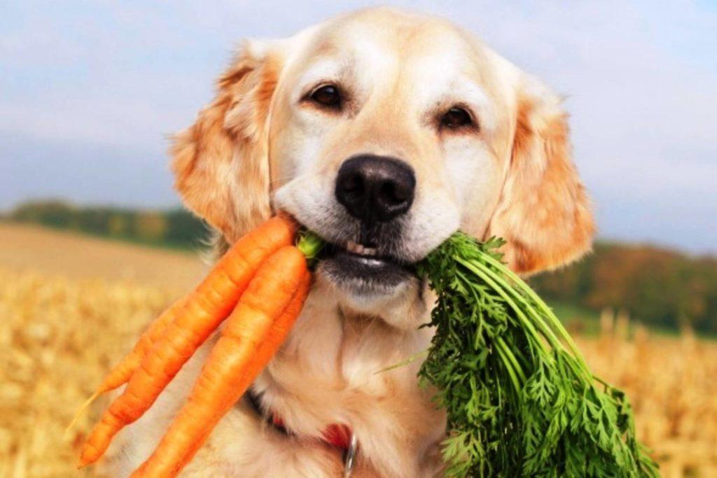 Prohibited Dog Foods