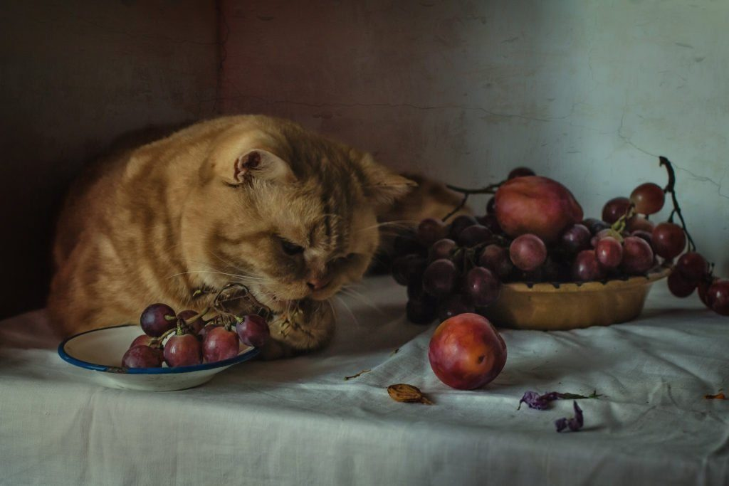 Raisins and Grapes - what can cats eat