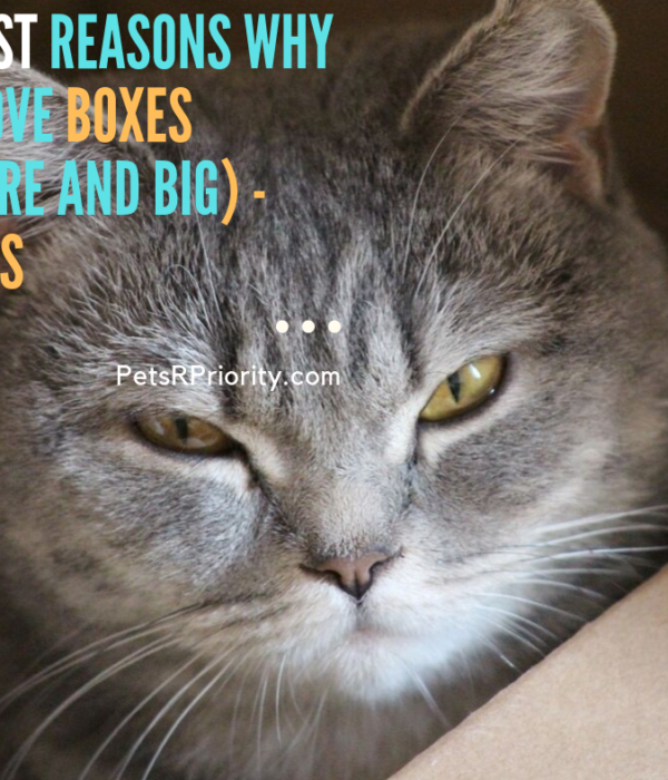 Silliest Reasons Why Cat Love Boxes (Square and Big) – Photos