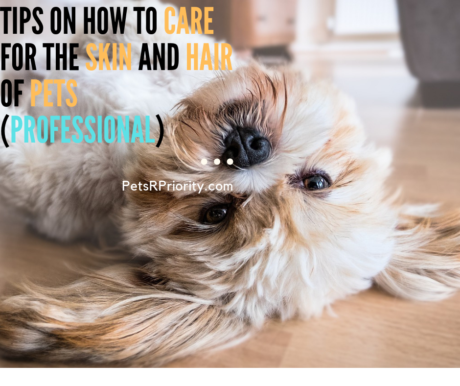Tips on How To Care for the skin and hair of pets (Professional)