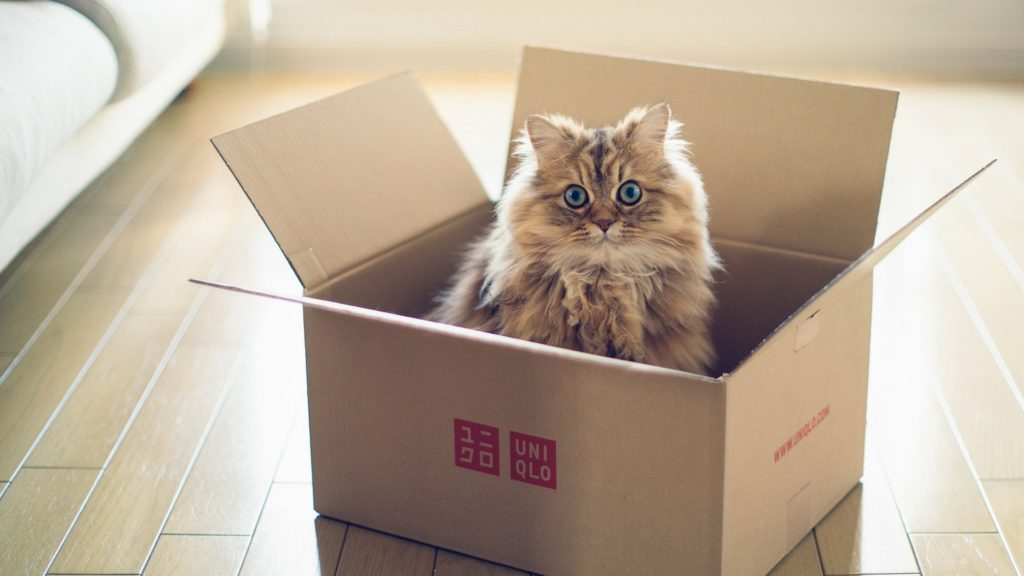 a box is what cats consider to be one of the Safest place