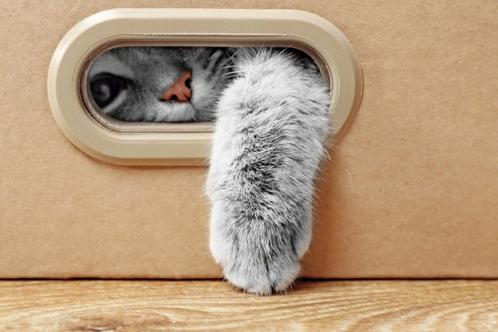 cat pushing his paw through a box opening