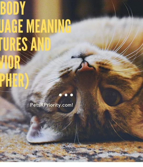 Cats Body Language Meaning - Gestures and behavior (Decipher)
