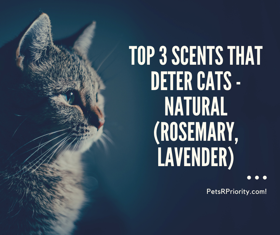 Top 3 Scents That Deter Cats - Natural (rosemary, lavender)