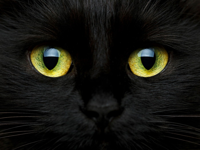 Interesting curiosities Black Cats