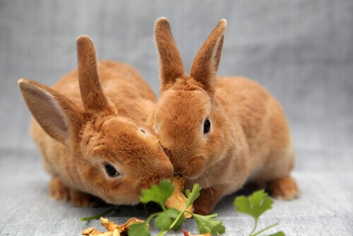 Foods that are dangerous for rabbits – My animals