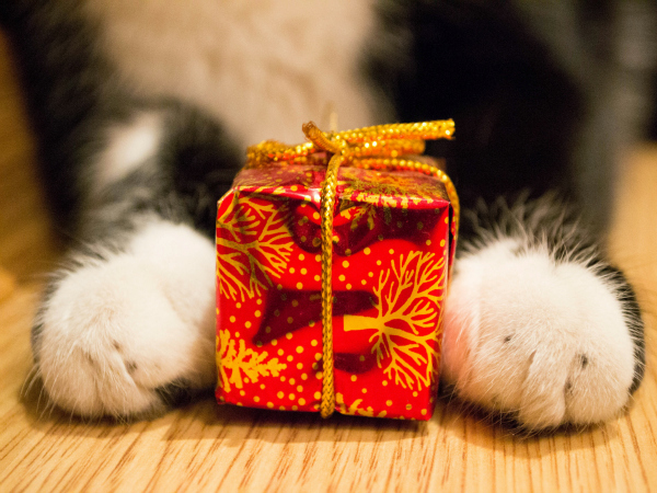 11 Original Gifts for Pets!