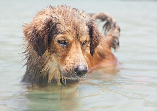 Is seawater dangerous for dogs? - My animals