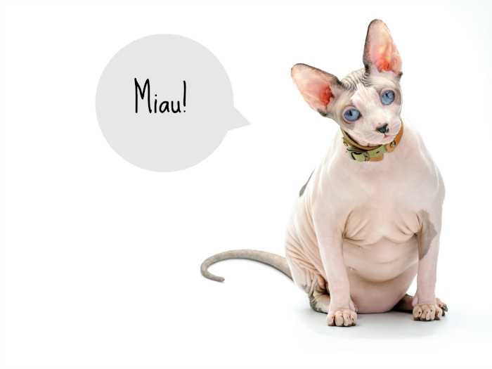Sphinx cats and hairless cats