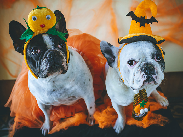 Halloween Animal … Scary costumes Idea! – For Your Dogs