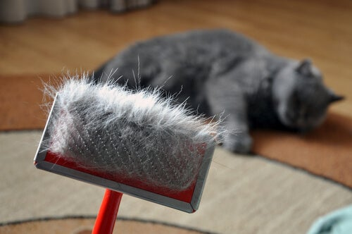 Big Hair Loss in Cats – Causes and Treatments