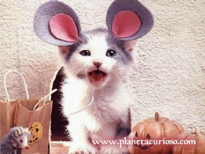 cats with costumes