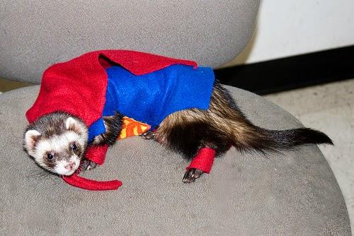 ferrets costumes
