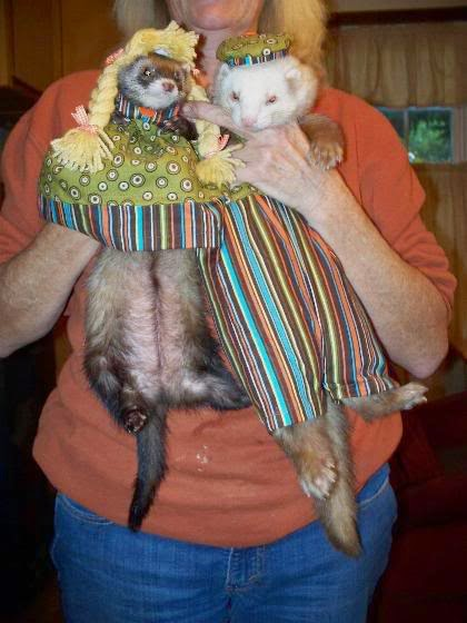 ferrets in disguise