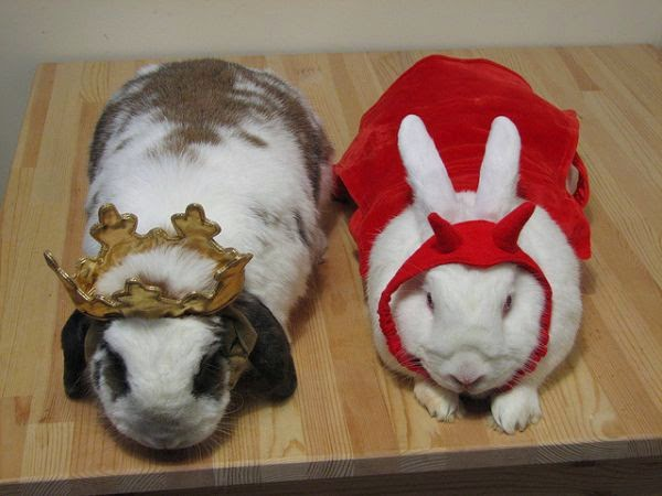 rabbits in disguise