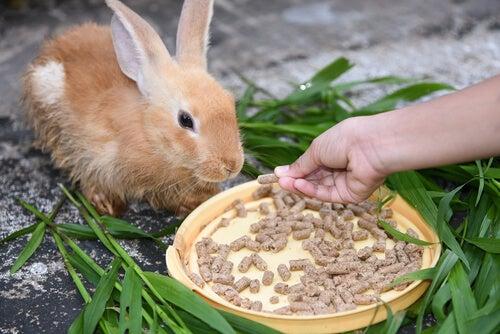 Pellets for rabbits