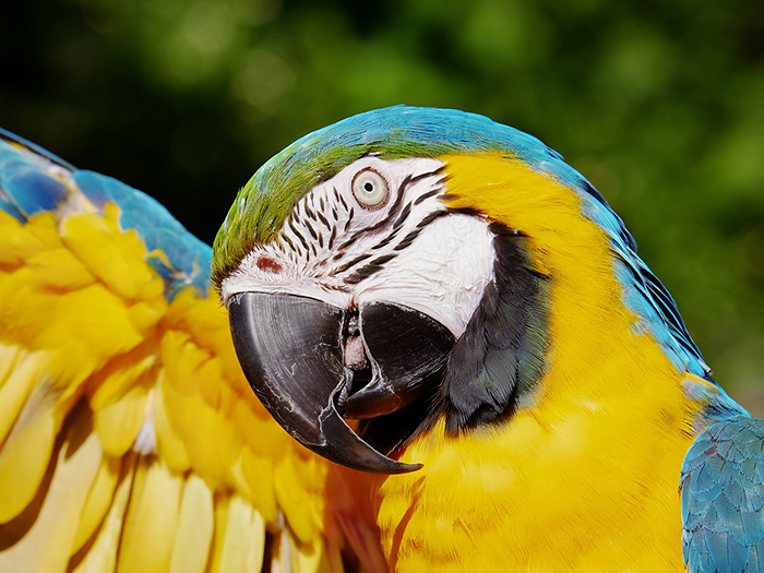 What do parrots eat? Parrot Feeding