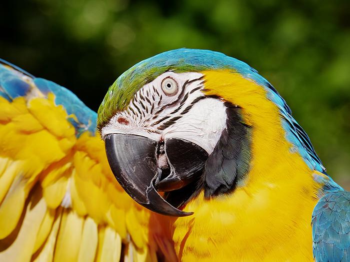 What do parrots eat? Parrot Feeding