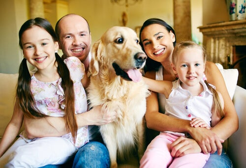 How to choose the most appropriate dog breed for the family? - My animals