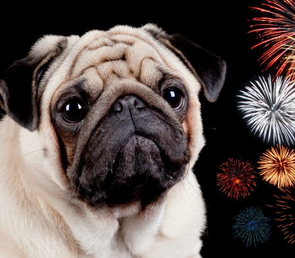How to calm your dog when there are fireworks?
