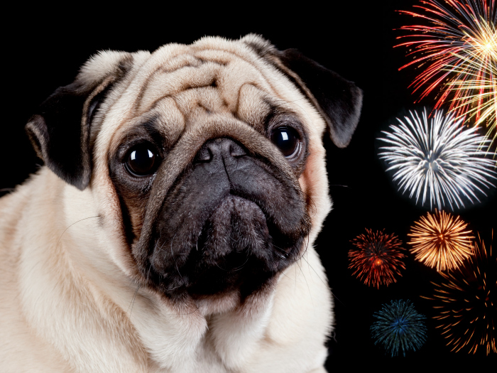 Trick soothe fireworks dogs
