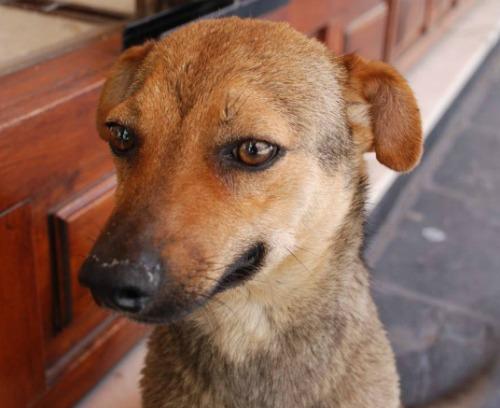 dogless day dog 28 may