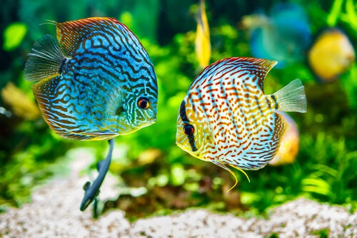 3 most common diseases of fish and their treatments - My animals