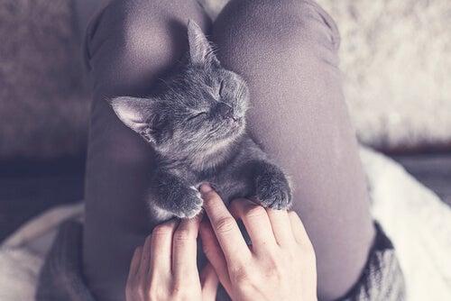 How much sleep do cats need?