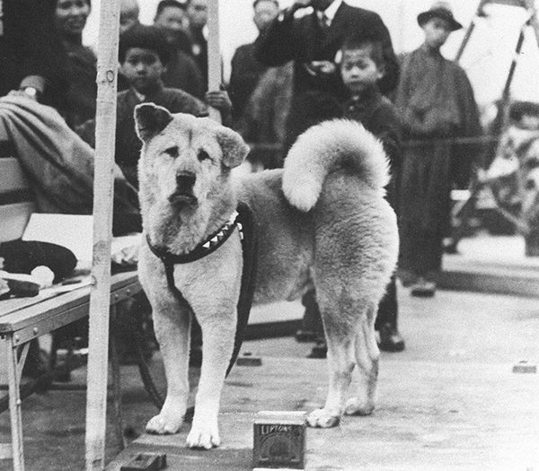 Hachiko: The Story of the Most Faithful Dog