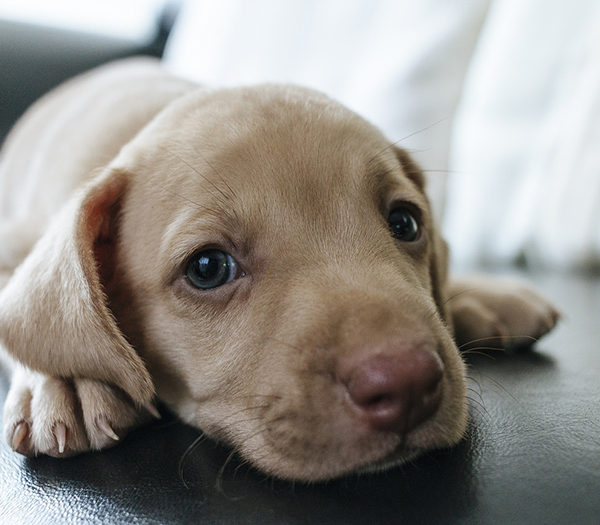How often should a dog be taken to the veterinarian?