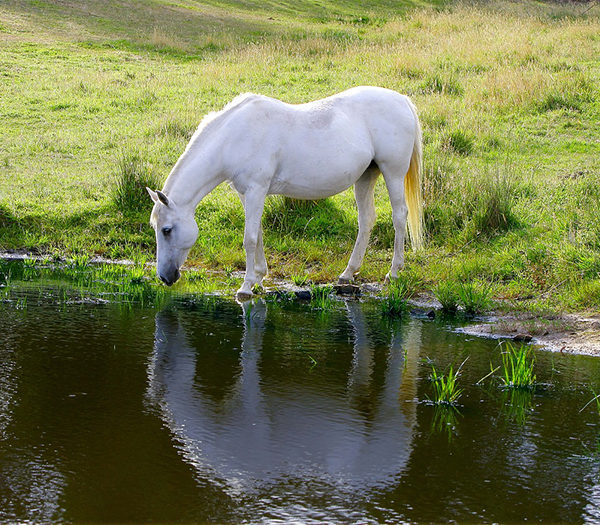 How much water does a horse drink a day?