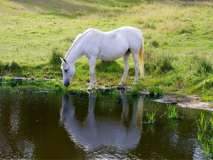 cuanta agua bebe un caballo